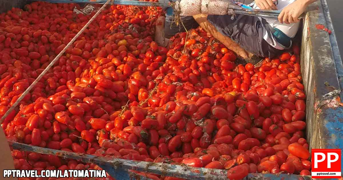 La Tomatina is not a waste of food